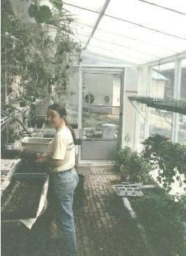 Doug S Passive Solar Greenhouse